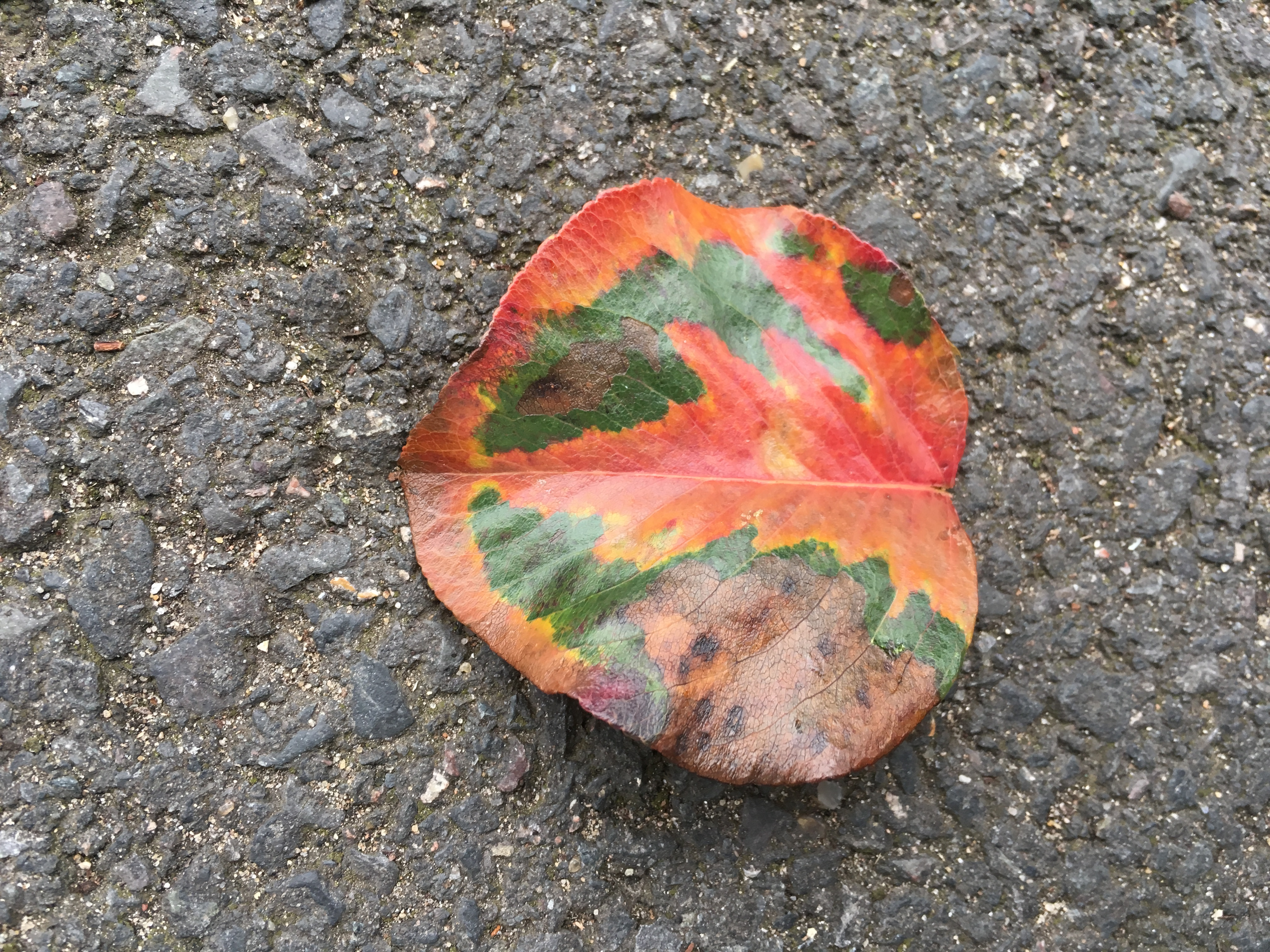 Leaf Autumn changing like a tumour dissolving
